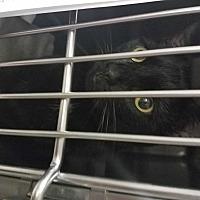 Adopt A Pet :: Beatrice - Indianapolis, IN