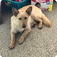 Adopt A Pet :: Polar - Edmonton, AB