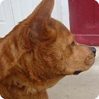 Adopt A Pet :: Helen - Gainesville, FL