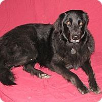 Adopt A Pet :: Catori - Seattle, WA
