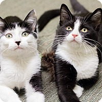Adopt A Pet :: Kasey & Keaton - Chicago, IL