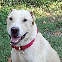 Adopt A Pet :: AA-Marley - Tyler, TX