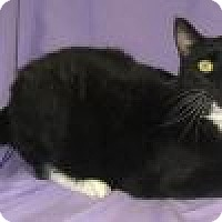 Adopt A Pet :: Gabriel - Powell, OH