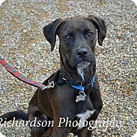 Adopt A Pet :: Huxley - in Maine - kennebunkport, ME