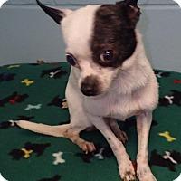 Adopt A Pet :: Brooklyn - geneva, FL