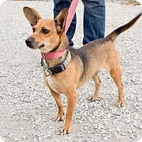 Adopt A Pet :: Maggie - Norwalk, CT