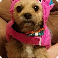 Adopt A Pet :: Tempe - Ogden, UT