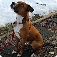 Adopt A Pet :: Dempsey - Woodinville, WA