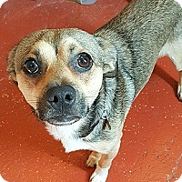 Adopt A Pet :: Cheeseboard - Oakland, CA