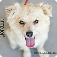 Adopt A Pet :: JORDAN - Modesto, CA