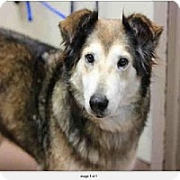 Adopt A Pet :: Rita - San Diego, CA
