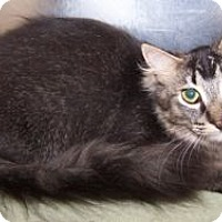 Adopt A Pet :: K-Platt2-Mica - Colorado Springs, CO