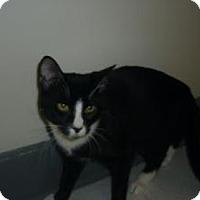 Adopt A Pet :: Klondike - Milwaukee, WI