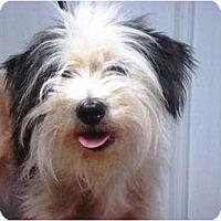 Adopt A Pet :: Trixie - Irvington, KY