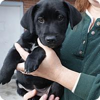 Adopt A Pet :: Brooke - Randolph, NJ