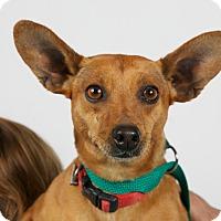 Adopt A Pet :: Cinnamyn - Nuevo, CA