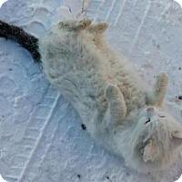 Adopt A Pet :: Leroy - Hamilton, ON