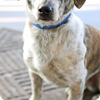 Adopt A Pet :: Tiger - Knoxville, TN