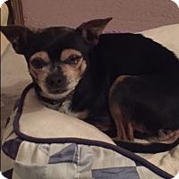 Adopt A Pet :: Harley - Bernardston, MA
