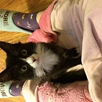 Domestic Mediumhair Cat for adoption in Woodland Hills, California - Didi & Dixie