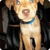 Adopt A Pet :: Leo - Memphis, TN