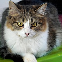 Adopt A Pet :: Whitney - Palo Cedro, CA