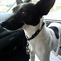 Adopt A Pet :: Angel - Tonawanda, NY