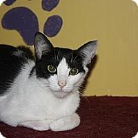 Adopt A Pet :: Cookie (LE) - Little Falls, NJ