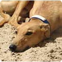 Adopt A Pet :: Leif - St Petersburg, FL