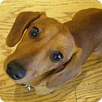 Adopt A Pet :: Blake - San Jose, CA