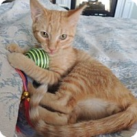 Adopt A Pet :: Tate - Colorado Springs, CO