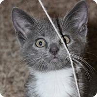 Adopt A Pet :: Rosetta - Irvine, CA