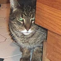 Adopt A Pet :: Cuba - Jamaica Plain, MA