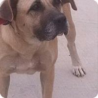 Adopt A Pet :: Andrea - Jacksonville, TX