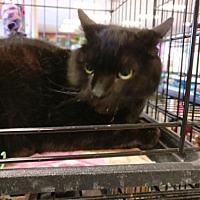 Adopt A Pet :: Owen - Avon, OH