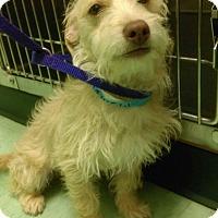 Adopt A Pet :: Jackson - Renton, WA