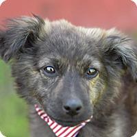 Adopt A Pet :: Iko - Denver, CO