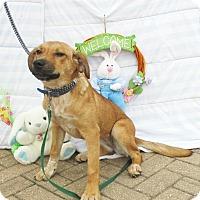 Adopt A Pet :: Filipa - West Chicago, IL