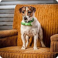 Adopt A Pet :: Fonzie - Concord, NC