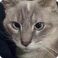 Adopt A Pet :: Jasmyne - Fargo, ND