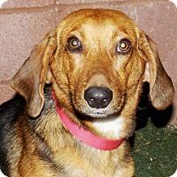 Adopt A Pet :: Tango - Oxford, MS