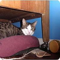 Adopt A Pet :: P.J. - Warren, MI