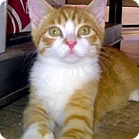 Adopt A Pet :: Waldo - Escondido, CA