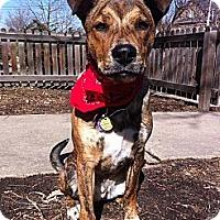 Adopt A Pet :: Teague - Broomfield, CO
