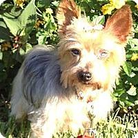 Adopt A Pet :: ANGELITE - Jacksonville, FL