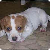 Adopt A Pet :: Bella - Chandler, IN