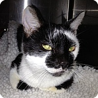 Adopt A Pet :: Olympia - Troy, OH