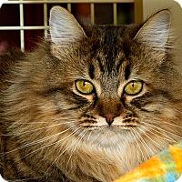 Adopt A Pet :: Effie M - Sacramento, CA