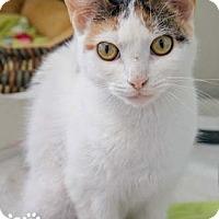 Adopt A Pet :: Sabrina - Merrifield, VA