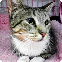 Adopt A Pet :: Ivy - Castro Valley, CA